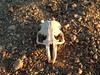 Bones & Shells : 2 galleries with 17 photos