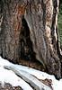 San Jacinto Mountains, Suicide Rock Trail<br /> 27 Nov 2010